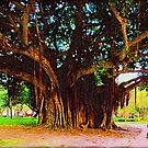 Romance Under the Banyan Tree by Ginny Schmidt