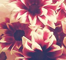 Retro red & white daisies  by bardenne