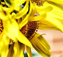Sunflower by Linda Boyer