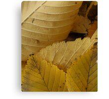 Golden Elm Leaves Canvas Print