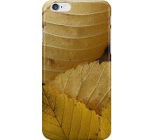 Golden Elm Leaves iPhone Case/Skin