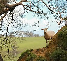 Otway - Hiding from the Wind by Andrew Dodds