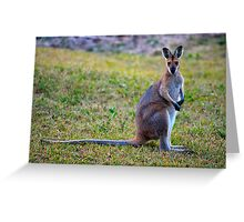 Wallaby Watching Greeting Card
