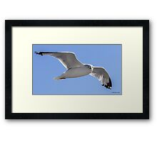 Being Watched by a Seagull Framed Print