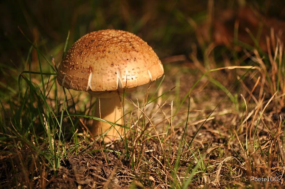 Sesame Seed Bun Mushroom by Poete100