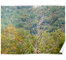 BLUE RIDGE PARKWAY - Virginia Poster