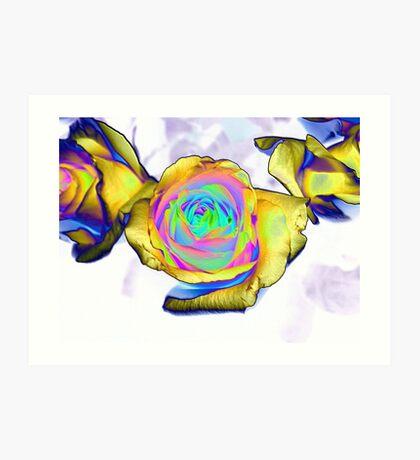 Multi colored flower Art Print