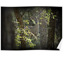 Coues White-tailed Deer (Doe) Sighting Poster