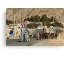 Taking My Goats to Town Canvas Print