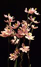 Native Orchid of Victoria by Lynne Kells (earthangel)