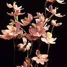 Native Orchid of Victoria by Lynne Kells (earthangel)