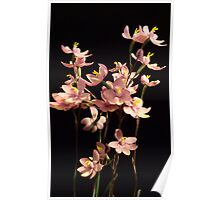 Native Orchid of Victoria Poster