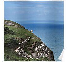 Crazy sheep Poster