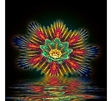 Star Flower Reflections Photographic Print
