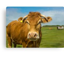 Oil Painted Limousin Cow Canvas Print