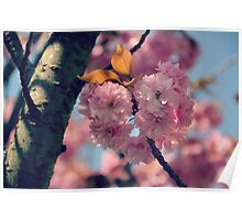 Cheery Cherry Blossoms Poster