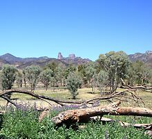 Warrumbungles from Belougery flats by SharronS