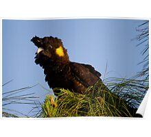 Posing Parrot Poster