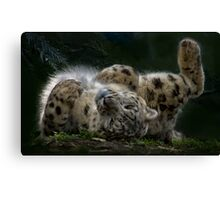 Rolling in the sunlight Canvas Print