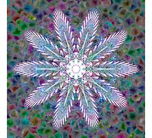 Flower Gems Photographic Print