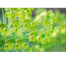 Green is the color of Spring Photographic Print