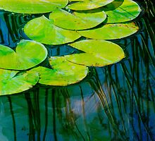 Lily Pads 2 by Rebecca Cozart
