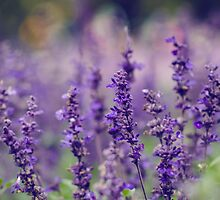 Lovely Lavender by Valerie Rosen