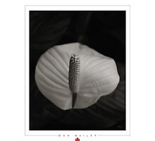 Another Sort of Flower by Don Bailey