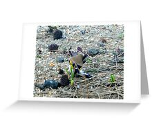 Finch Cleaning Greeting Card