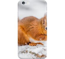 Red Squirrel searching for food iPhone Case/Skin