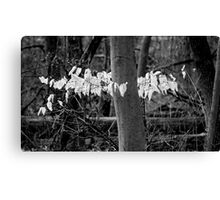 ghost leaves Canvas Print