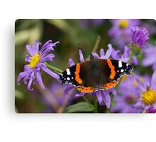 Red Admiral (Butterfly) Canvas Print
