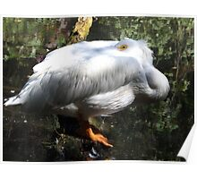 Exotic Bird , Bronx Zoo, Bronx, New York Poster