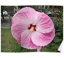 Flower Close-Up, Jersey City, New Jersey Poster