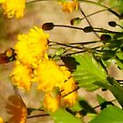 Golden Wildflowers by WildThingPhotos
