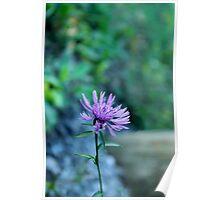 Purple Wild Flower Poster