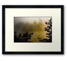 Silhouetted Trees  Framed Print