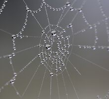 Foggy Morning Spider Web  by Stephen J  Dowdell