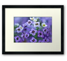 Purple and White Macro Framed Print