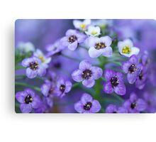 Purple and White Macro Canvas Print