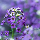 Purple and White Flowers by Photopa