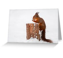 Red squirrel gathering food for Winter Greeting Card