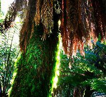 Ferntree by Angelika  Vogel