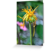 A Calendula Begins to Fade Greeting Card