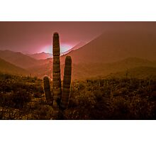 Cactus with Setting Sun Photographic Print