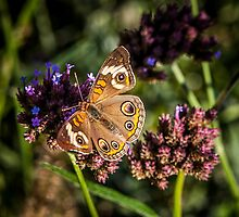 On The Wings Of A Butterfly by EdwardKay