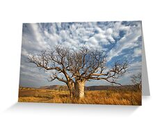 Kimberley Boab greets the day Greeting Card