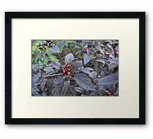 Black Pearl Peppers Framed Print