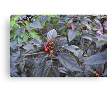 Black Pearl Peppers Canvas Print