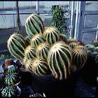 Greenhouse Cactus by tonipix